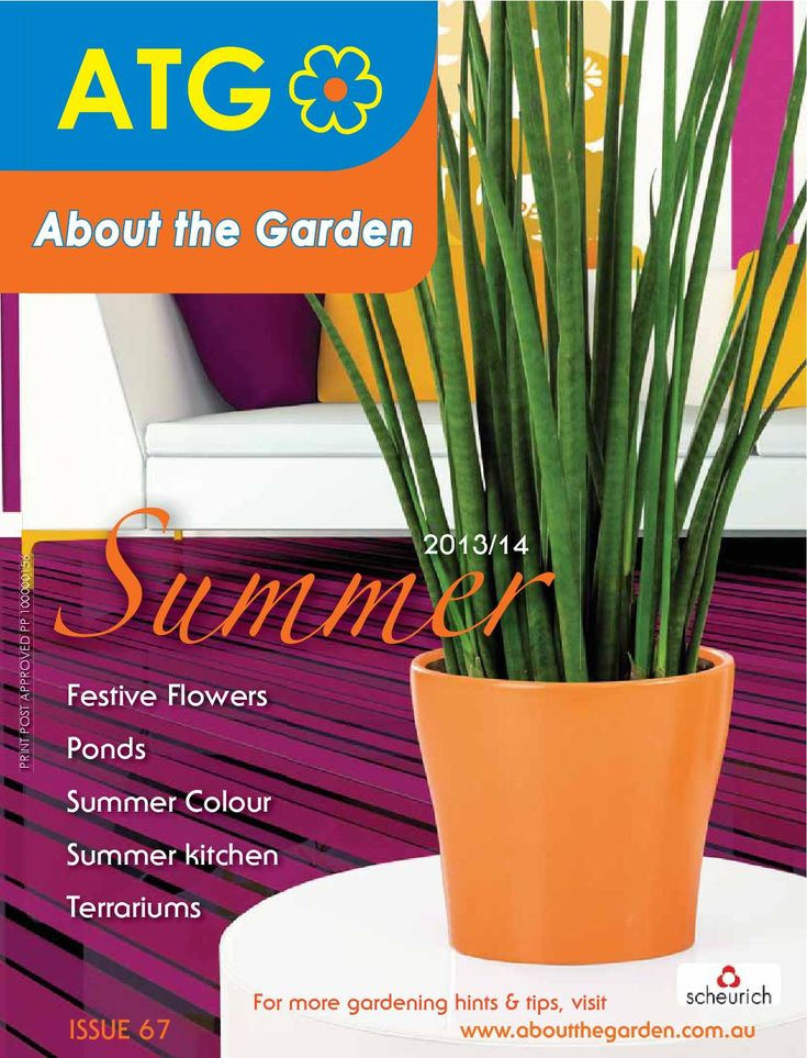 Celebrate Summer in your garden. Great gardening articles on Festive Flowers, Ponds, Summer Colour, Summer Kitchen & Terrariums..... PLUS read up on whats ready to plant in your garden with our Australian Regional Garden Diary. Read more on our website http://www.aboutthegarden.com.au. Happy Gardening from your local gardening experts #summer #australia #garden #aboutthegarden #magazine #read