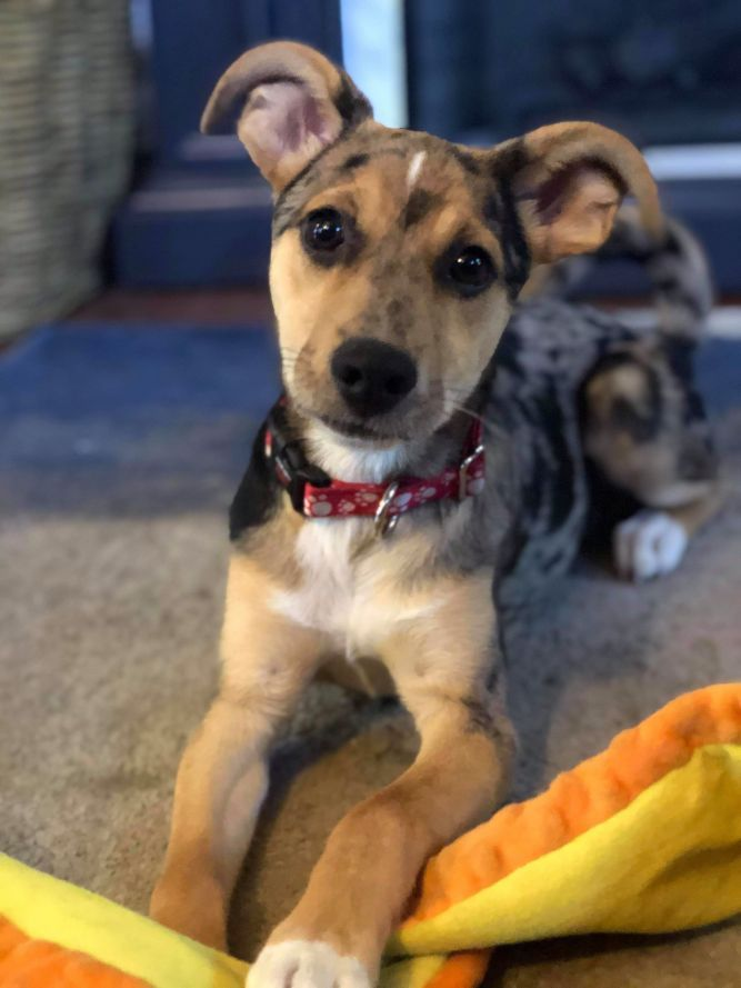 Adopt Ripley On Petfinder Shelter Dogs Dog Adoption Pet Adoption