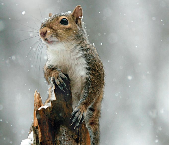 Small Game: Late-Season Squirrel Hunting Tips   Field & Stream