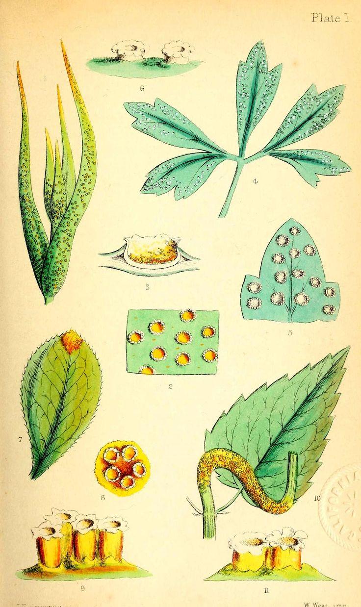 114 best Vintage Science images on Pinterest | Botanical ...