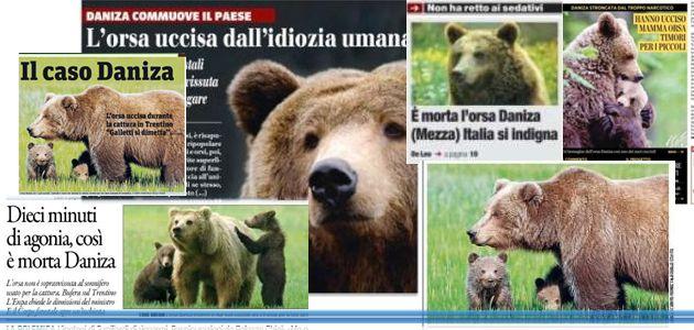 L'orsa Daniza su tutti i giornali. Lo sdegno sui Social http://mediacomunicazione.net/?p=8833