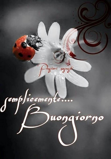 Good Morning Amore : Best immagini di buon giorno images on pinterest