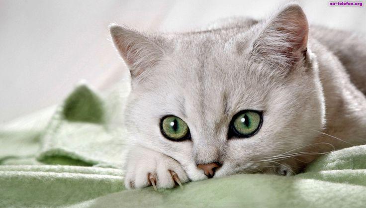 Ile lat miałby Twój kot gdyby był człowiekiem? | funandstory.blog.pl