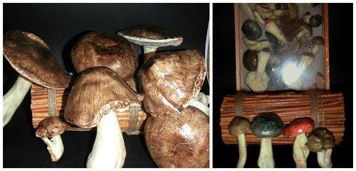 Setas y champiñones para decoración
