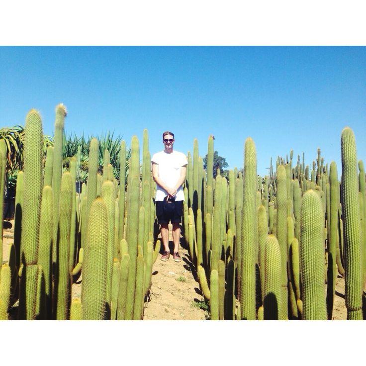 Desert Theater Nursery 9655 Kiwi Meadow Lane Escondido, CA 92026 #cactus #succulent #california