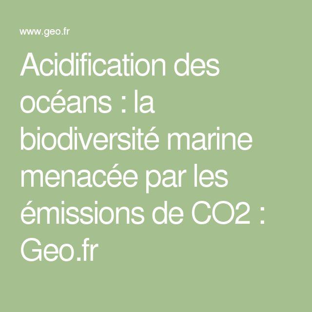 Acidification des océans : la biodiversité marine menacée par les émissions de CO2 : Geo.fr