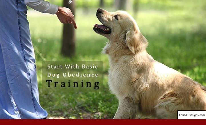 Training Tips For Shy Dogs And Pics Of How To Train Your Dog To