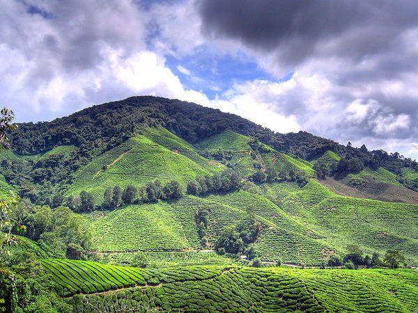 Cameron Highlands #Malaysia (foto: Houston Marsh)  http://www.zuidoostaziemagazine.com/de-belangrijkste-bezienswaardigheden-van-maleisie