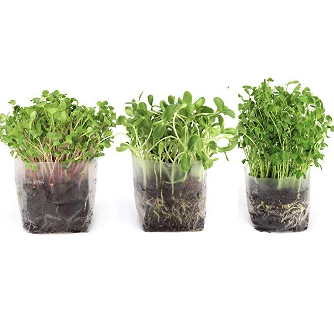 Amazon Com Pop Up Microgreens Kit 3 Varieties Just Add Water And Seed Perfect Size A Quick Smart Nutritio Growing Vegetables Microgreens Seed Starter