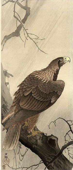 """小原古邨 Koson Ohara """"Eagle on a Bough"""""""