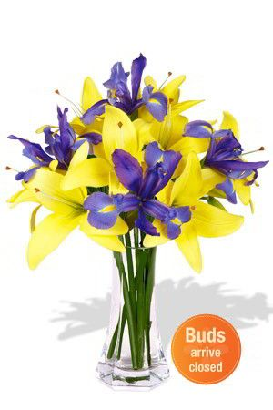 Bliss - This pleasant floral arrangement of elegant blue Irises and blissful yellow Asiatic Lilies will brighten any room. It is gender nonspecific and perfect for any occasion. $51.43