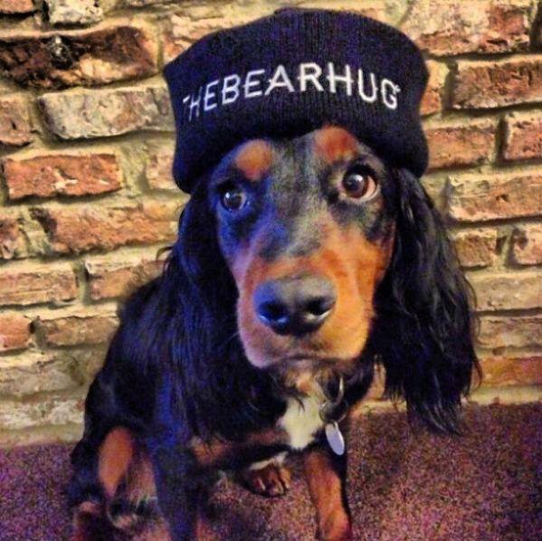 Dog in The Bearhug Co beanie - I mean really?! #thebearhugco #lukedixon #dog #beanie #