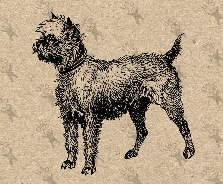 Retro image Griffon Dog Instant Download Vintage Digital printable clipart graphic Burlap Fabric Transfer Iron On Decor Scrapbooking 300dpi by UnoPrint on Etsy