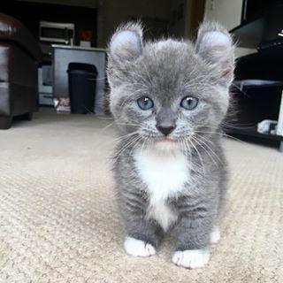 Esta publicación sobre gatos Munchkin. | 11 Pequeñas cosas que te harán sonreír esta semana