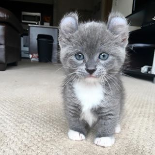 This post about munchkin cats. | 11 Little Things To Make You Smile This Week