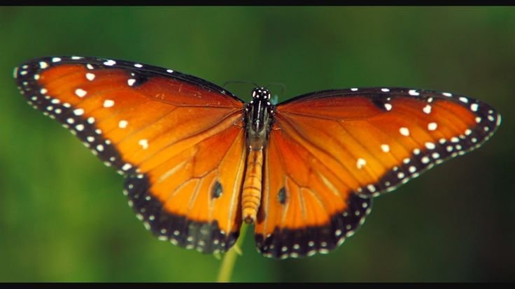 "The beauty of Pollination -- This clip from ""Wings of Life"" is mesmerizing! The full length movie is now streaming on Netflix!  Worth the watch.  #savethebees   #butterflies   #environment  #pollinators"