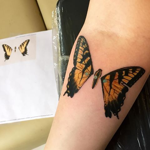 paramore cruise together and got matching tiger swallowtail tattoos ...