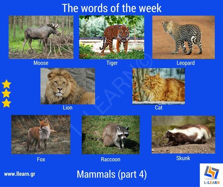 Mammals (part 4). #Αγγλικά #αγγλικές #λέξεις #αγγλική #γλώσσα #λεξιλόγιο #English #english #words #english #language #vocabulary #LLEARN