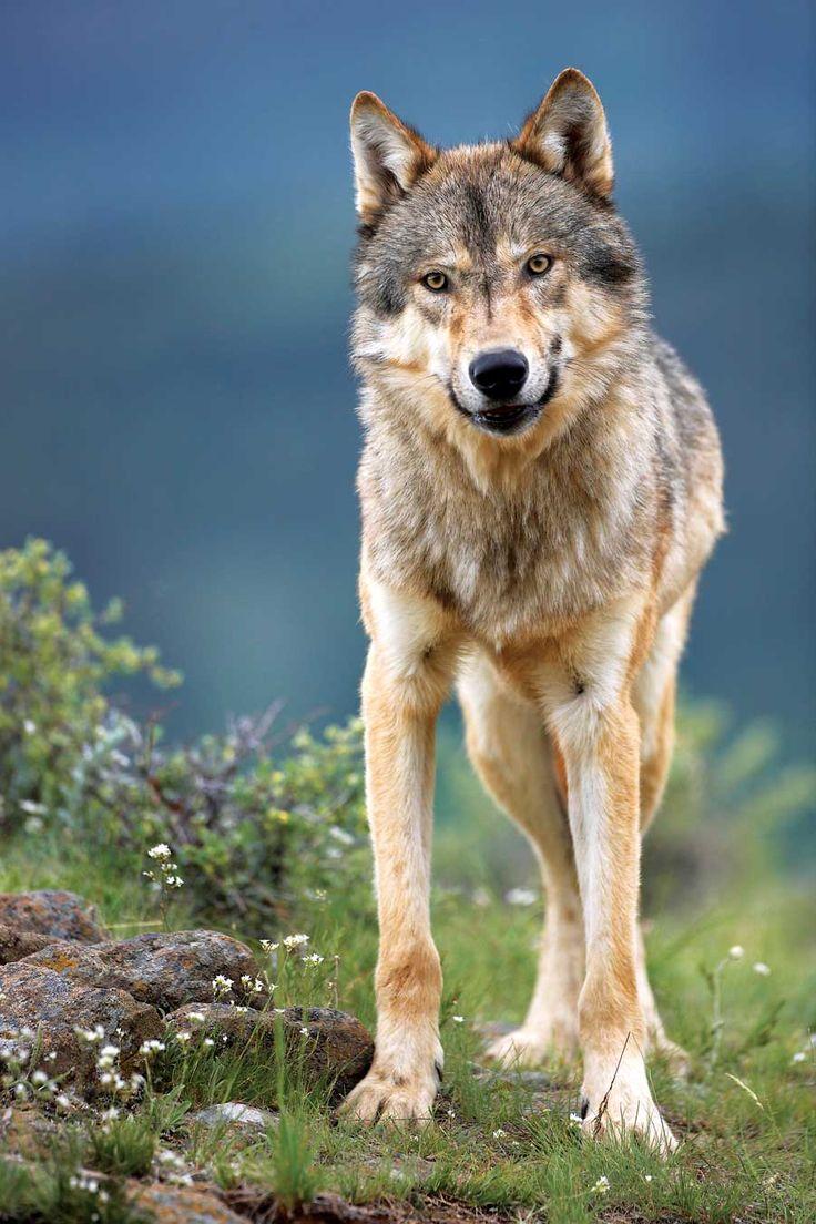 Keystone Species: How Predators Create Abundance and Stability