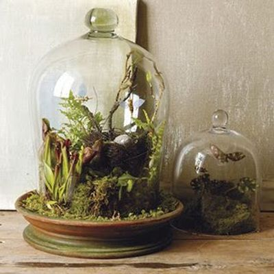 My Terrarium fascination ignited after seeing them over and over again while aimlessly wondering around the store Anthropologie.  The tiny little ecosystems were encased in these wonderfully heavy glass containers.  I loved how simple the outside, and how fragile and complex the inside.