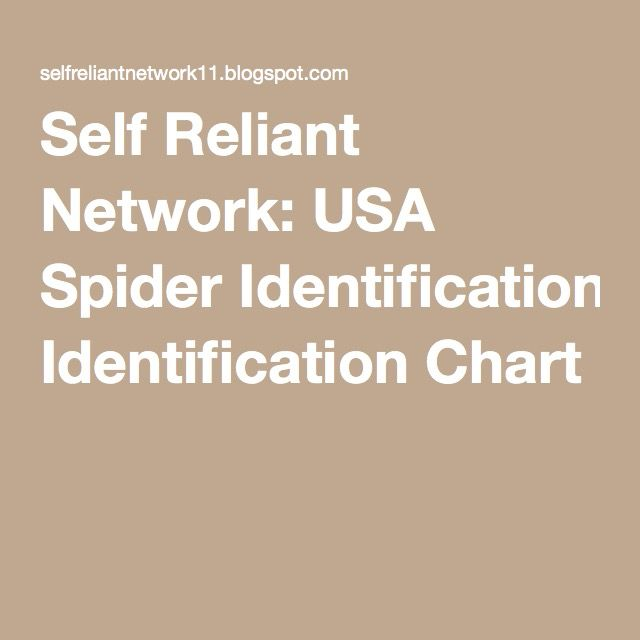 Self Reliant Network: USA Spider Identification Chart