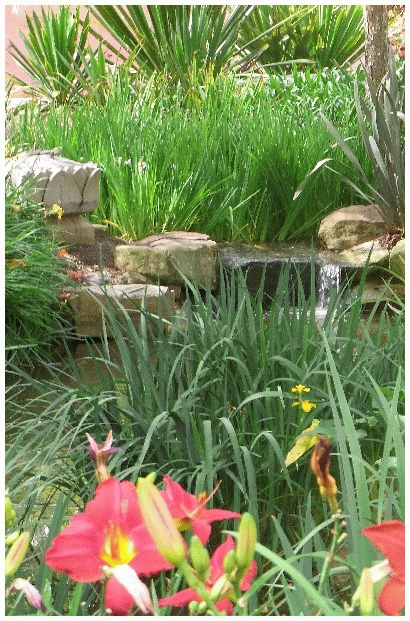 Waterfalls in the woodland garden in Roma Street are a favorite place for the lizards to sun