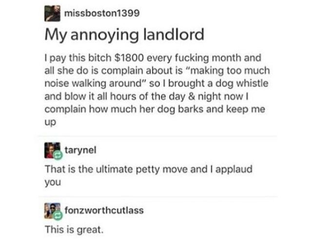 i would do this but i will never not have a dog