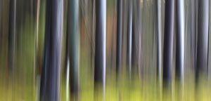 Projet forêt 4316