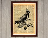 Bird on the twig cherry air flying animal nature print Rustic decor Cabin Vintage Retro poster Dictionary page Home interior Wall 0025