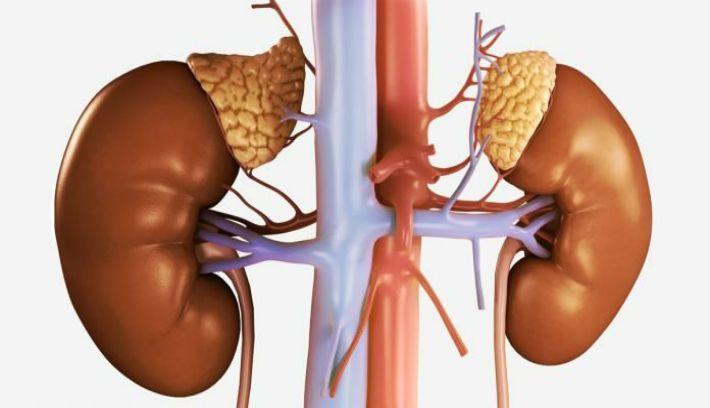 Вы быстро заметите изменения к лучшему! А со временем, вы начнете терять лишний вес! Надпочечники, маленькие эндокринные железы, расположенные на верхней части почек, имеют колоссальное значение для всего организма. Они выделяют такие гормоны, как стероиды, адреналин и норадреналин. Эти гормоны укрепляют иммунитет, улучшают скорость обмена веществ, а также регулировать кровяное давление. Эти гормоны помогают организму …