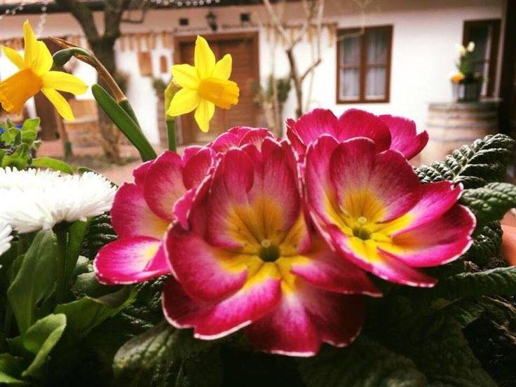"""Möllmann Eszter Tavaszi versike Esztertől """"A tavasz megérkezett, Sok színt hozott a házba,  Kicsik- nagyok egyaránt Gyorsan jöttek lázba. Maradj velünk napsütés, Szépen kérünk tégedet, A sok virággal együtt Aranyozd be lelkünket!"""" Több kép Esztertől: https://www.instagram.com/mollmanneszti/"""