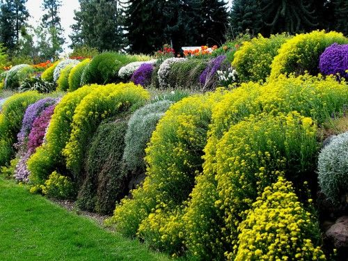 trailing wall duncan garden spokane washington (passing out, this is so gorgeous!!!)