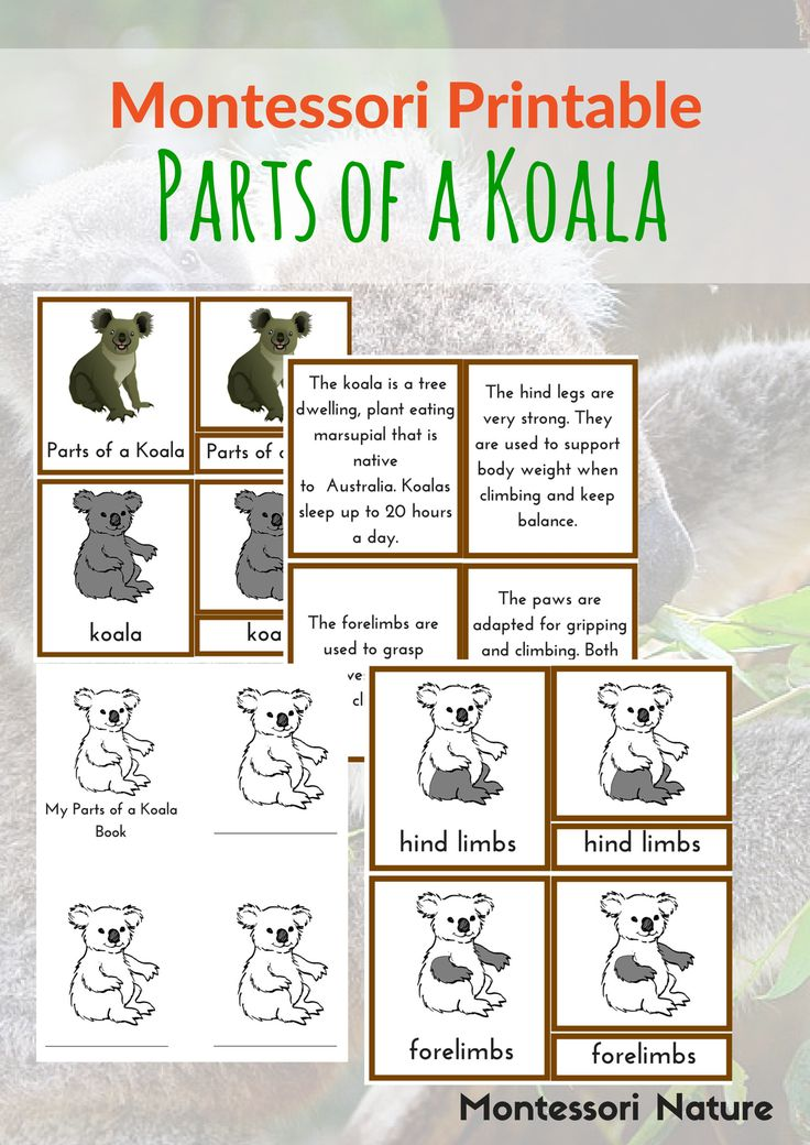 Free Parts Of a Koala Printable | Montessori Printables | Addition to Australia Continent Box | Montessori Nature Blog | Subscriber Freebie
