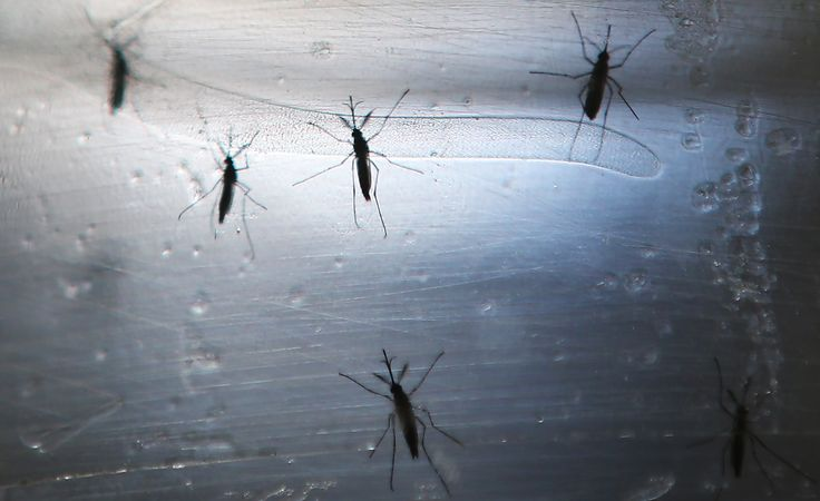 The first case of locally-acquired Zika virus has arrived in Palm Beach County.