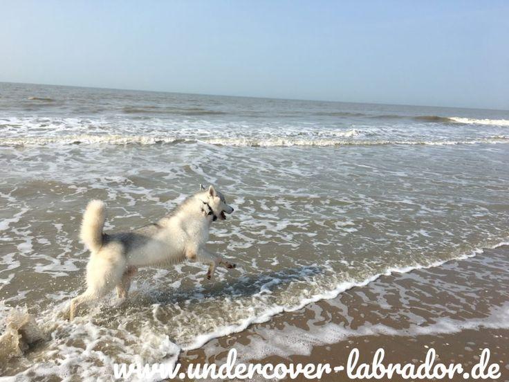 5 Tipps für entspannte Hundebegegnungen – Undercover Labrador