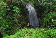 Falling Waters State Park in Chipley, Florida, falling water that cascades 73 feet down an ancient sinkhole.