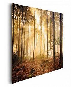 Schilderij Bos met zonnestralen