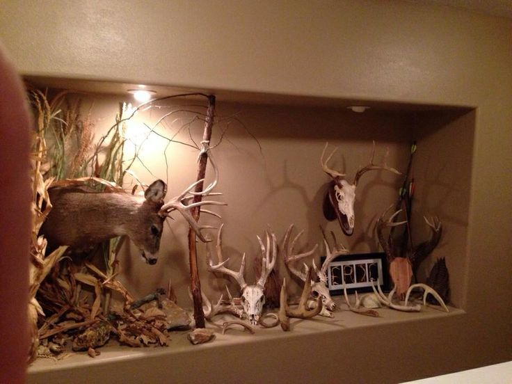 Man Cave Hunting Room : Best images about taxidermy on pinterest horns