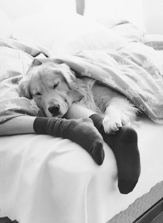 Together: Sunday Mornings, Sleepy Time, Sweet, Best Friends, Pet, Lazy Sunday, Cuddling Buddies, Golden Retriever, Animal