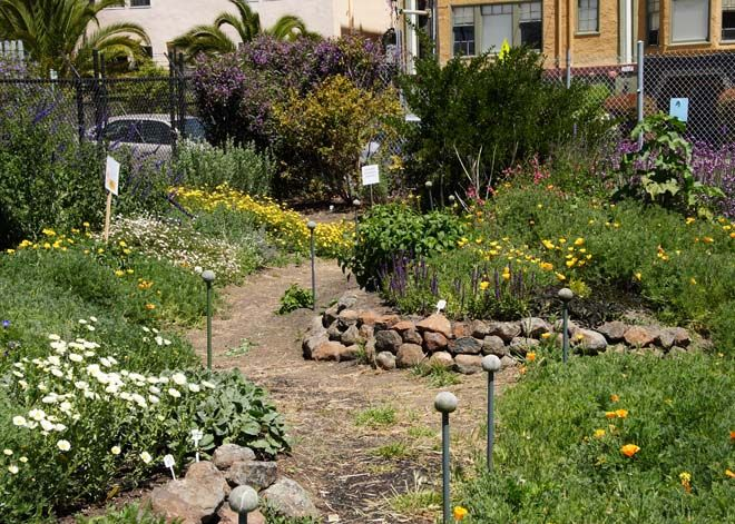 a section of the ucb bee evaluation garden planted with nonnative plants photo courtesy