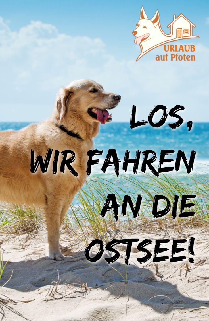 Hundefreundliche Ferienhauser Und Ferienwohnungen An Der Deutschen Ostseekuste Unsere Ferienhauser In Strandnahe Bieten Mensch Und Hund Abwechslungsreiche Feri