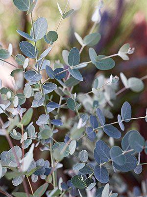 12 best Indoor Plants images on Pinterest | Best indoor plants ...
