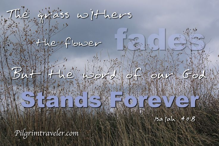 """Isaiah 40:8 """"The grass withers, the flower fades, But the word of our God stands forever"""""""