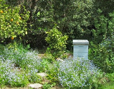 Lease a bee-hive for your home garden or lifestyle block