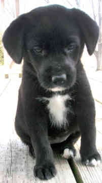 Black Lab and...? I want him, too!