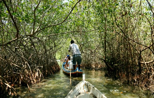 Cartagena Tours | The Real Cartagena  Swanning through the mangroves in La Boquilla with Alex Rocha