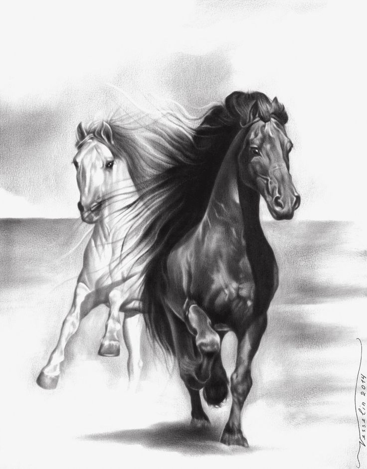 Horse Animal Print Oil Painting Drawing Limited Edition Poster Fine Art By Artist Vesselin Andreev Signed & Dated Original Realism by VesselinArtStudio on Etsy