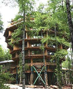Baobab tree hotel in Huilo Huilo, Chile