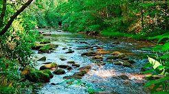 Sonido de agua y pajaros, estudiar, meditar, mente en blanco, pensar, sonidos relajantes - YouTube