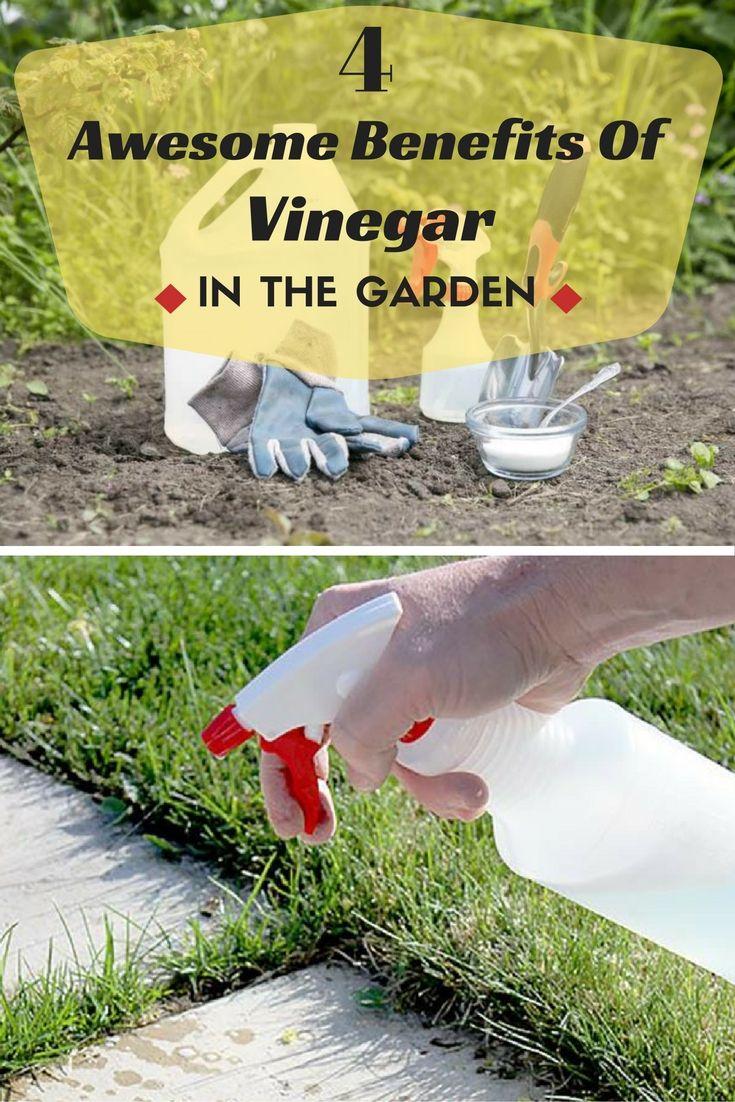 165 best gardens bug pest control images on pinterest pest